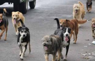 Falso que la secretaría de salud realice campañas de eliminación de mascotas