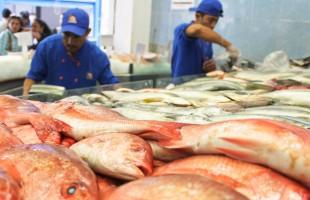Invita SAGARPA a población a beneficiarse de los productos Pesqueros durante Cuaresma y todo el año