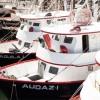 Definen CONAPESCA y el sector pesquero ribereño y de altamar fecha para veda del camarón en el Océano Pacífico