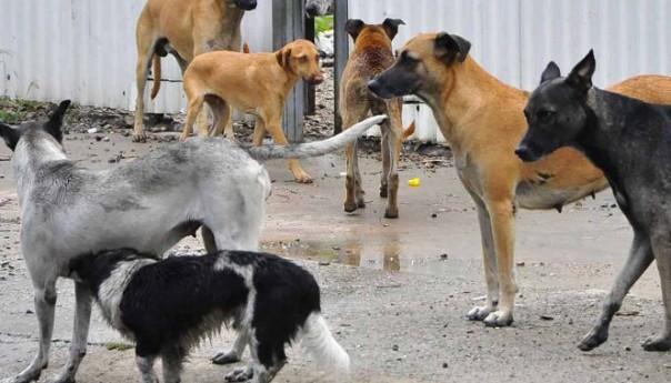 Redoblan acciones para el control canino en la ciudad: ecología