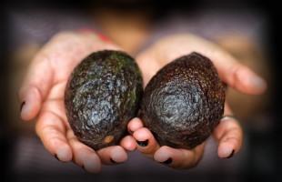 IMSS recomienda consumir 100 gramos de aguacate al día para reducir el colesterol